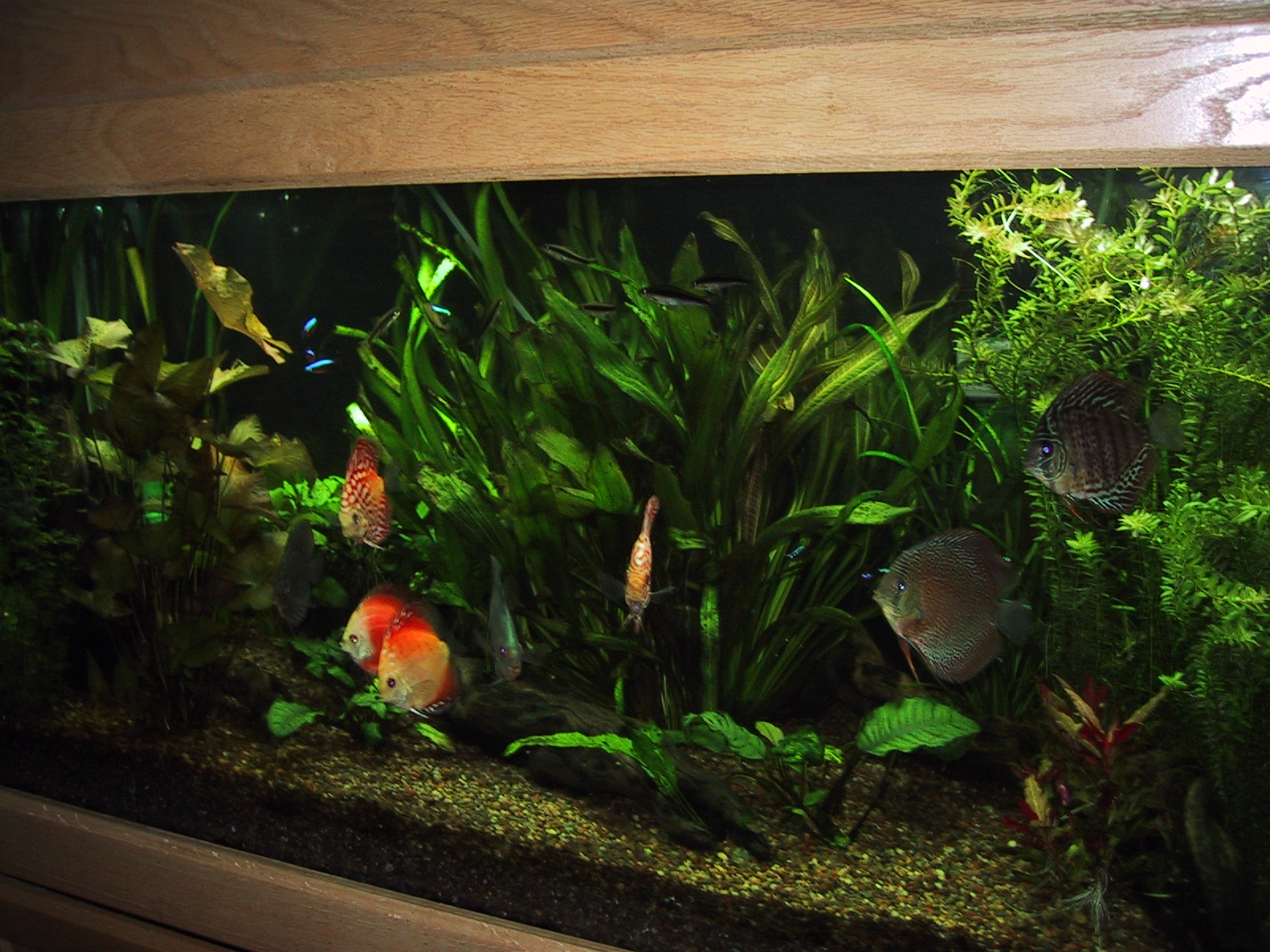 Beautiful aquarium set ups images frompo 1 Beautiful aquariums for home